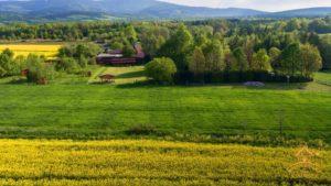 pola w wolimierzu