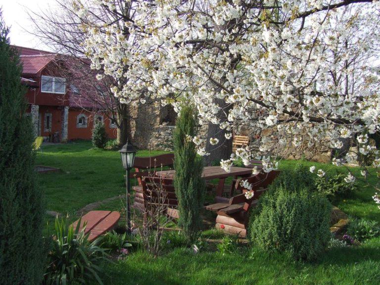 ogród wiosna